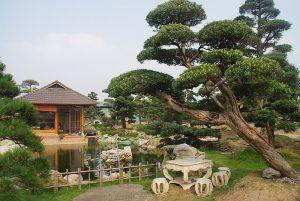 Vườn Nhật 1