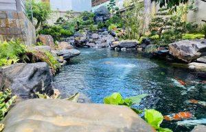 Hồ koi đá xanh Ninh vân